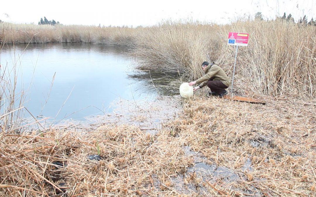 La Conselleria de Medi Ambient allibera 200 fartets al Paisatge Protegit de la Desembocadura del riu Millars
