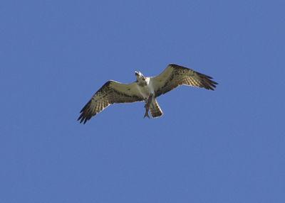 Milers d'aus en migració han triat la desembocadura del Millars per a descansar durant la darrera tardor