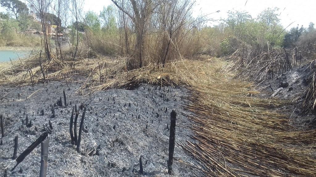 Un incendi crema 200 metres quadrats de vegetació al Paisatge Protegit de la Desembocadura del riu Millars