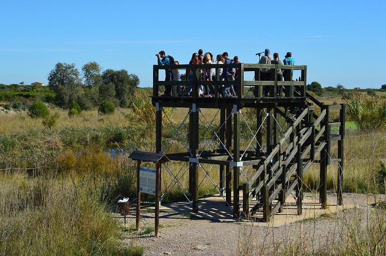 El Paisatge Protegit de la Desembocadura del Millars rep als primers turistes ornitològics familiars de la tardor