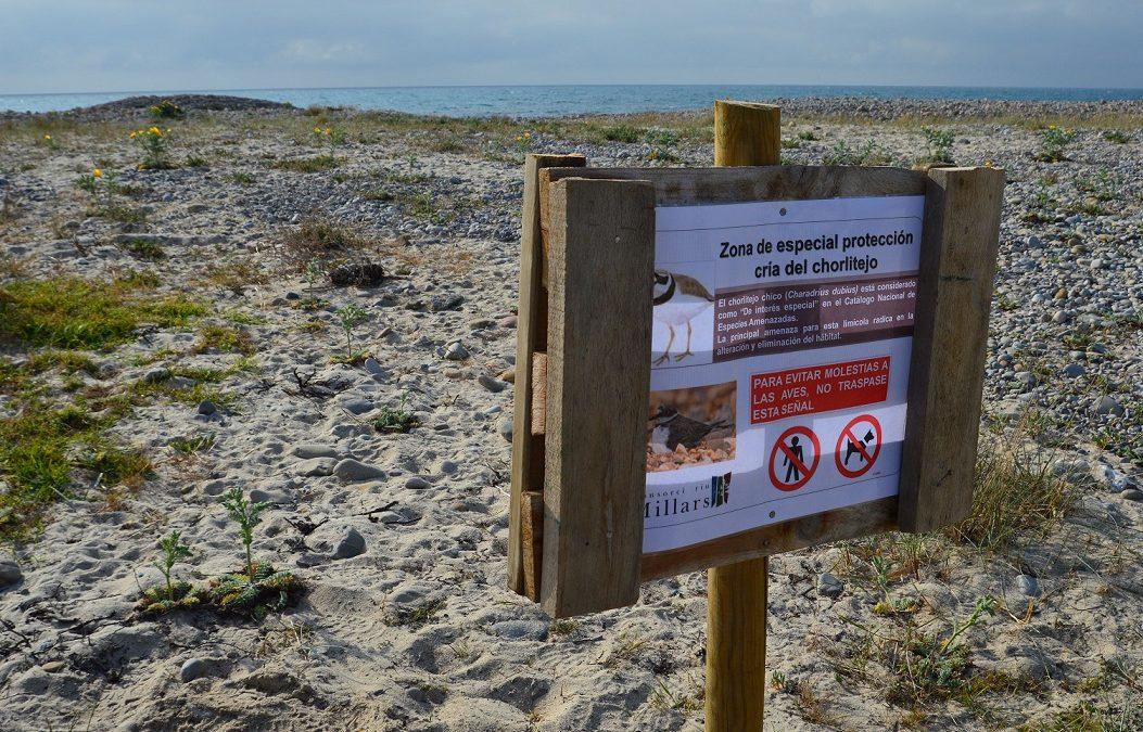 El Consorci riu Millars instal·la cartells per informar de la cria del corriol menut a la desembocadura