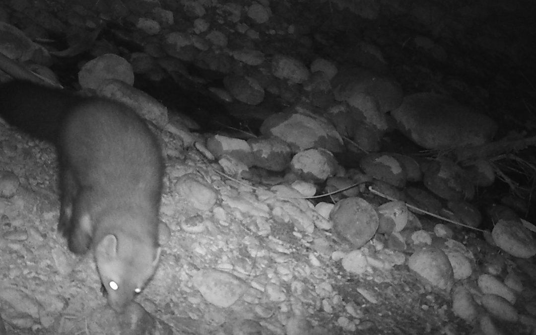 El foto parament mostra noves imatges de fauna salvatge al Paisatge Protegit de la Desembocadura del Millars