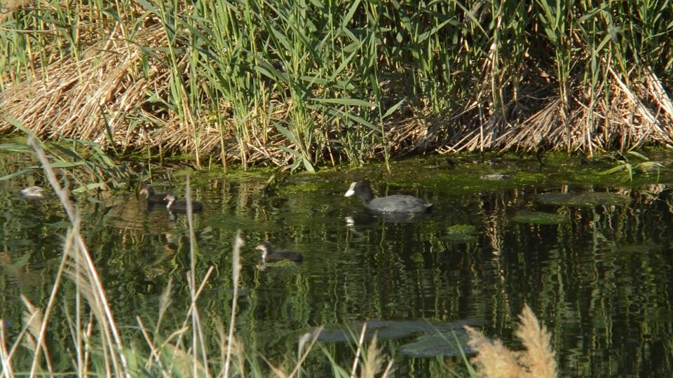El Consorci riu Millars demana no practicar la pesca al Paisatge Protegit durant la reproducció de les aus