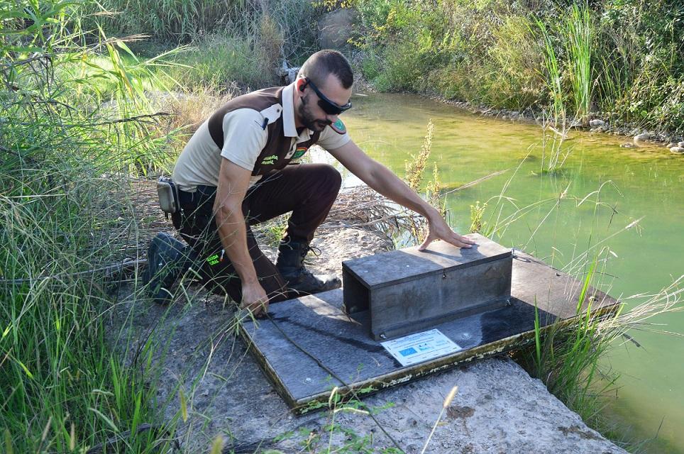 El Consorci riu Millars col·labora amb la Conselleria de Medi Ambient en el Life Lutreola per a conservar els visons europeus