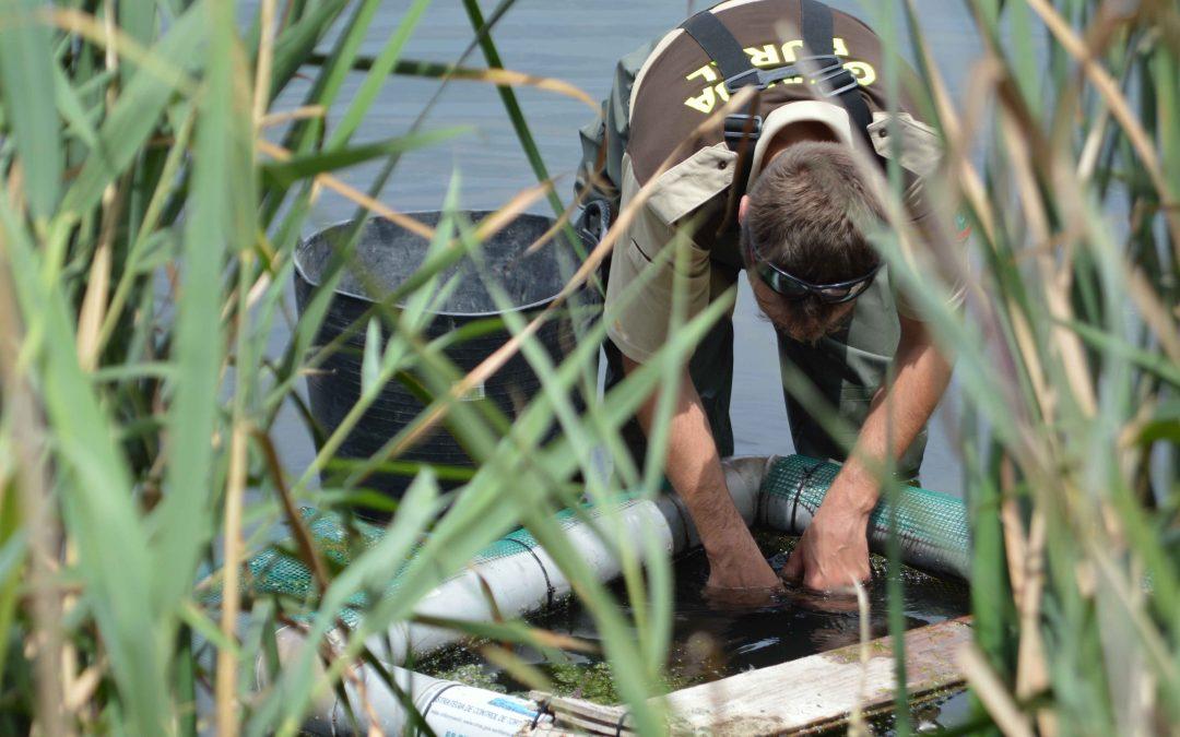 El Consorci del Paisatge Protegit de la Desembocadura del riu Millars inicia la campanya de seguiment i control de tortugues