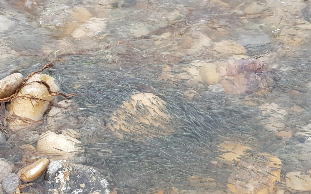 La desembocadura del Millars torna a ser un riu de vida gràcies a les pluges d'octubre i novembre