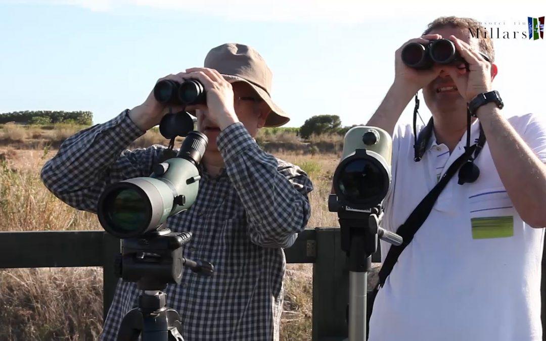 Augmenta el turisme ornitològic al Paisatge Protegit de la Desembocadura del riu Millars