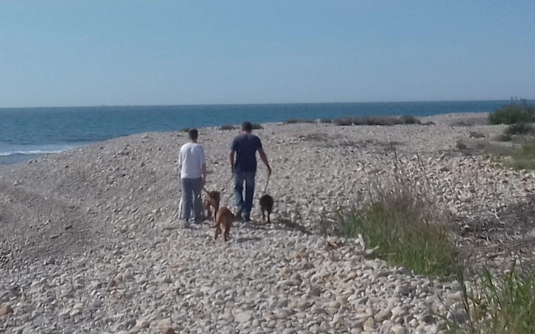 El Consorci riu Millars recorda la prohibició de dur gossos solts pel Paisatge protegit de la Desembocadura