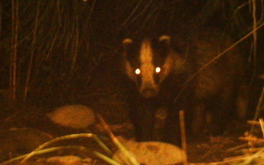 El Paisatge Protegit de la Desembocadura del riu Millars es confirma com a un excel·lent «corredor biològic» per a la fauna