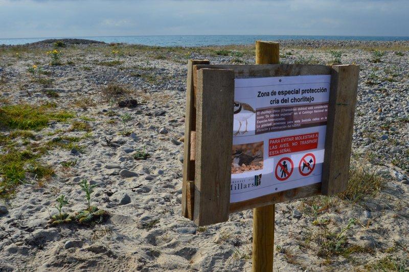 El Consorci del Paisatge Protegit de la Desembocadura del riu Millars inicia una campanya de conscienciació del corriol menut