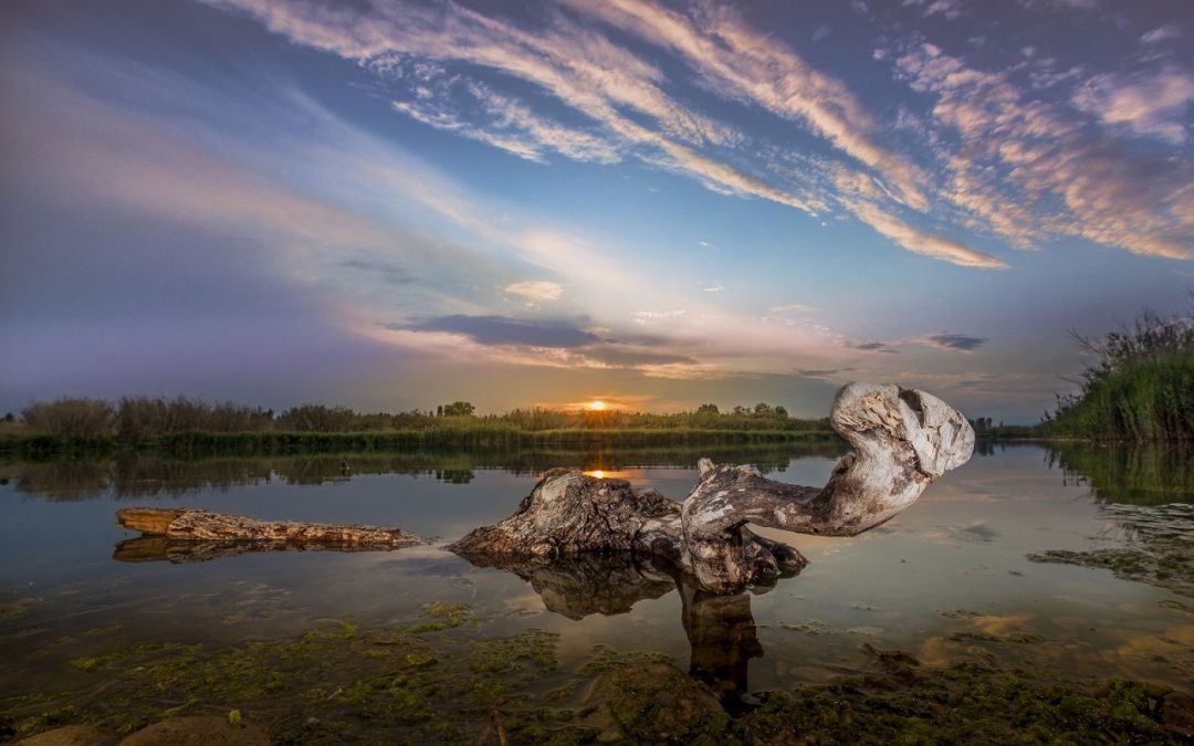 IV Concurs Fotogràfic. De l'arbre caigut. Foto: Carlos Seglar