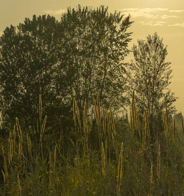 IV Concurs Fotogràfic. Empieza a caer el sol. Foto: Javier Pozo Tarrasó
