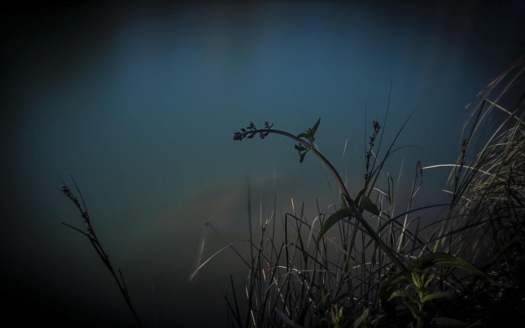 IV Concurs Fotogràfic. Flora. Foto Javier Jose Viciano