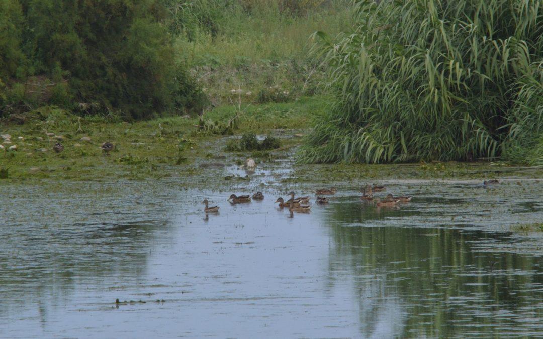 Tres mesos de cabal ecològic al Paisatge Protegit de la Desembocadura del Millars