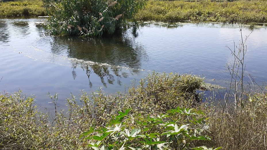 La guarderia rural del Consorci del Paisatge Protegit de la Desembocadura del riu Millars localitza una xarxa il·legal de grans dimensions instal·lada a la gola sud