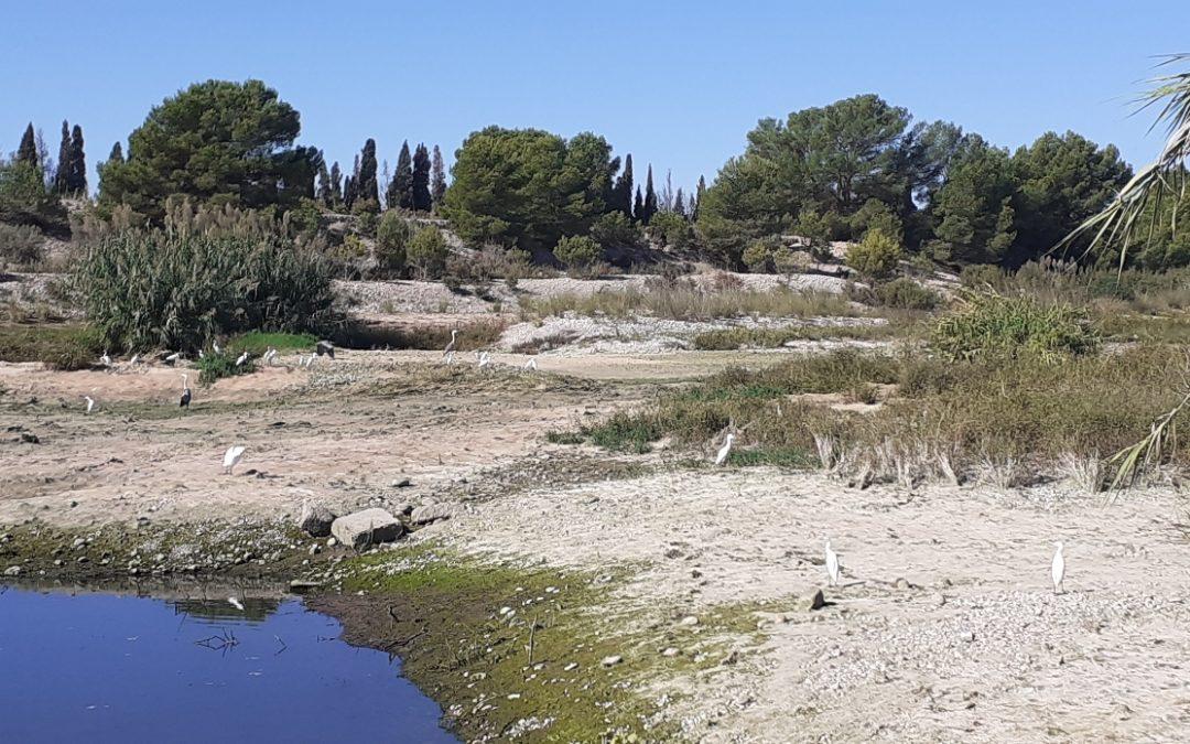 El Paisatge Protegit de la Desembocadura del riu Millars perd el cabal ecològic després de 4 mesos portant aigua fins a la Mediterrània de forma ininterrompuda