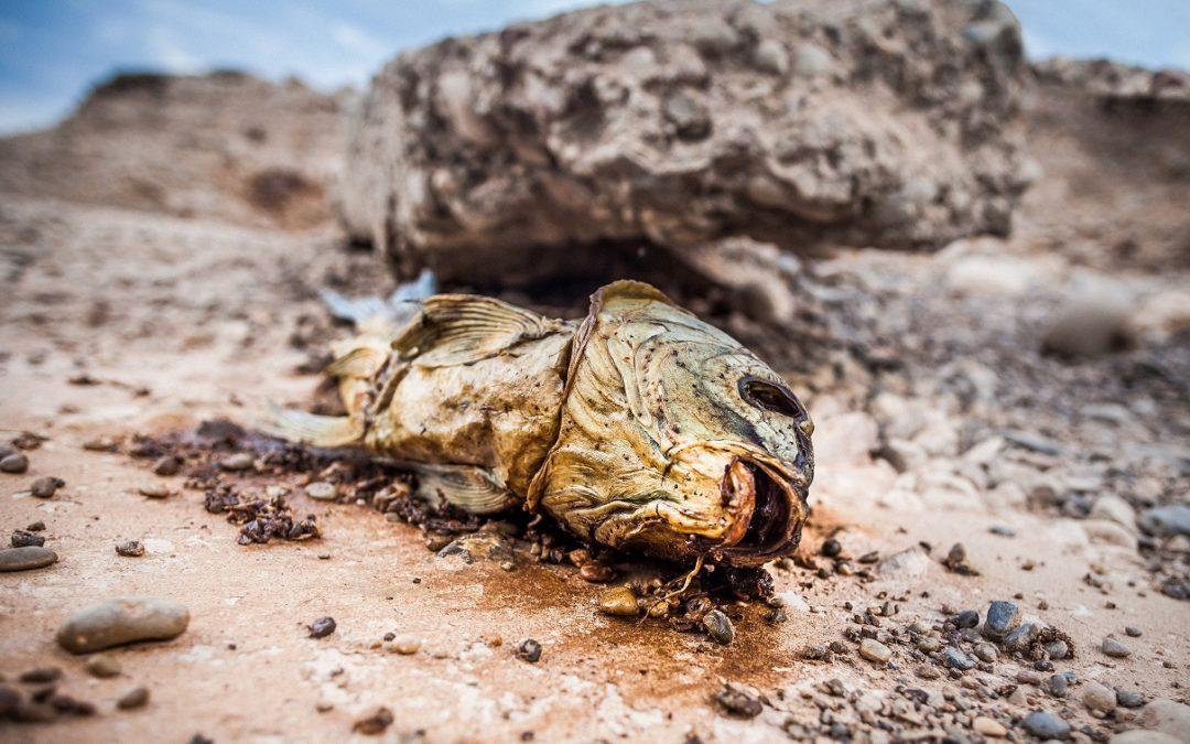 IV Concurs fotogràfic. Por la boca muere el pez. Foto José Cintas Albiol
