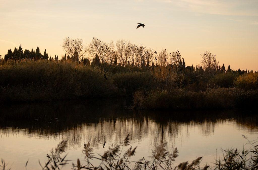 IV Concurs fotogràfic. Volant sobre el riu. Foto Pamela Agudo Pascual