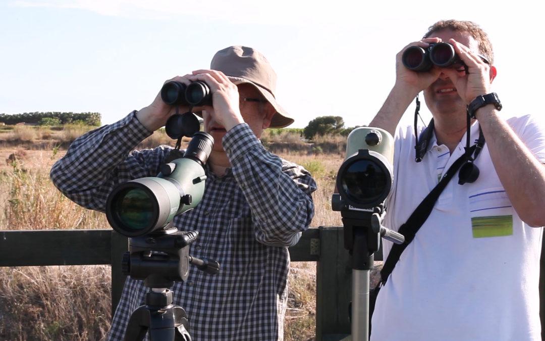 «Les aus de la desembocadura del riu Millars», és el títol de la cinquena entrega audiovisual sobre els valors ecològics del Paisatge Protegit fluvial més important de la província de Castelló