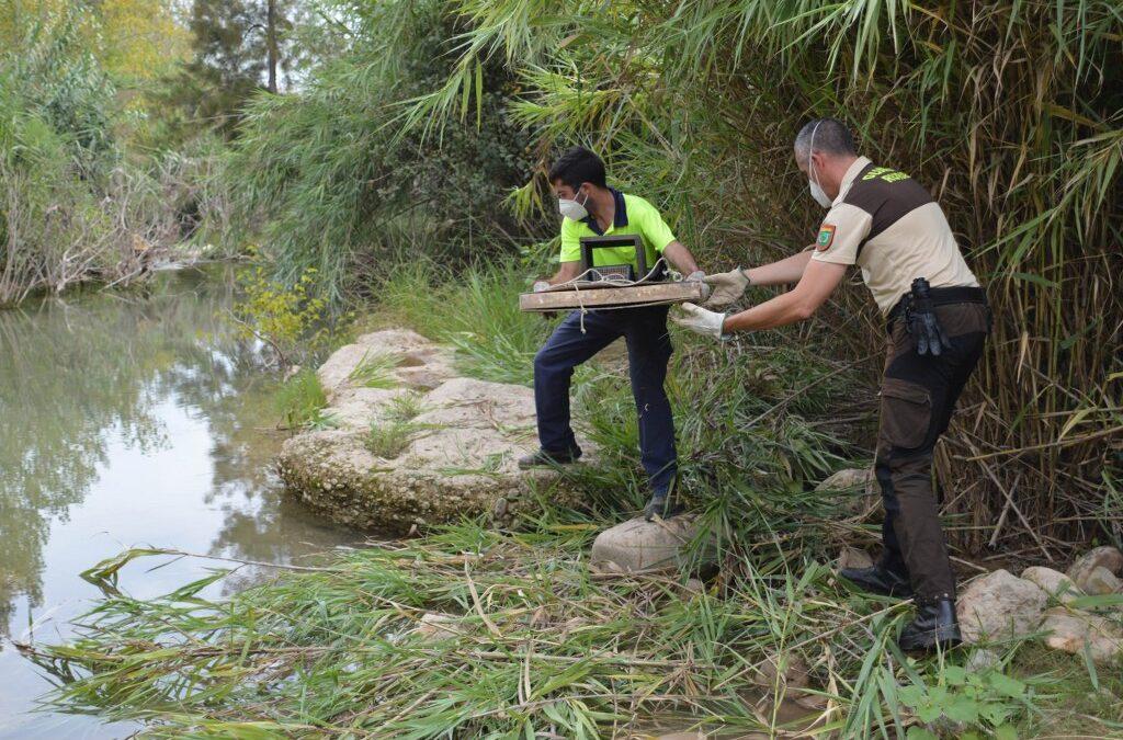 El Consorci gestor del Paisatge Protegit de la Desembocadura del riu Millars reprén el control de visons americans