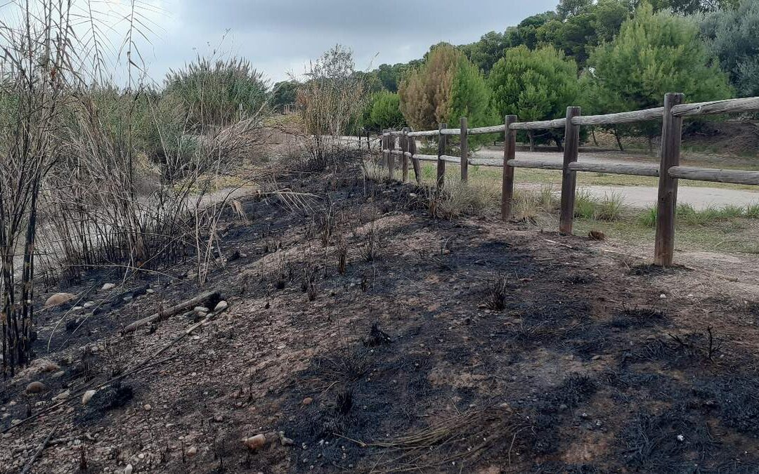 Els últims incendis ocorreguts al Paisatge Protegit de la Desembocadura del riu Millars han cremat diversos pins, canyars i una part de l'històric molí del Terraet