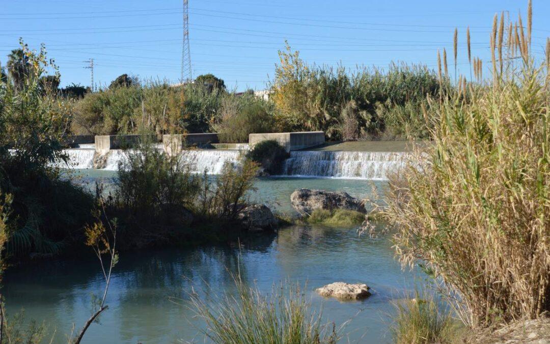 El Paisatge Protegit de la Desembocadura del riu Millars llueix esplendorós gràcies al cabal continu d'aigua fins a la mar