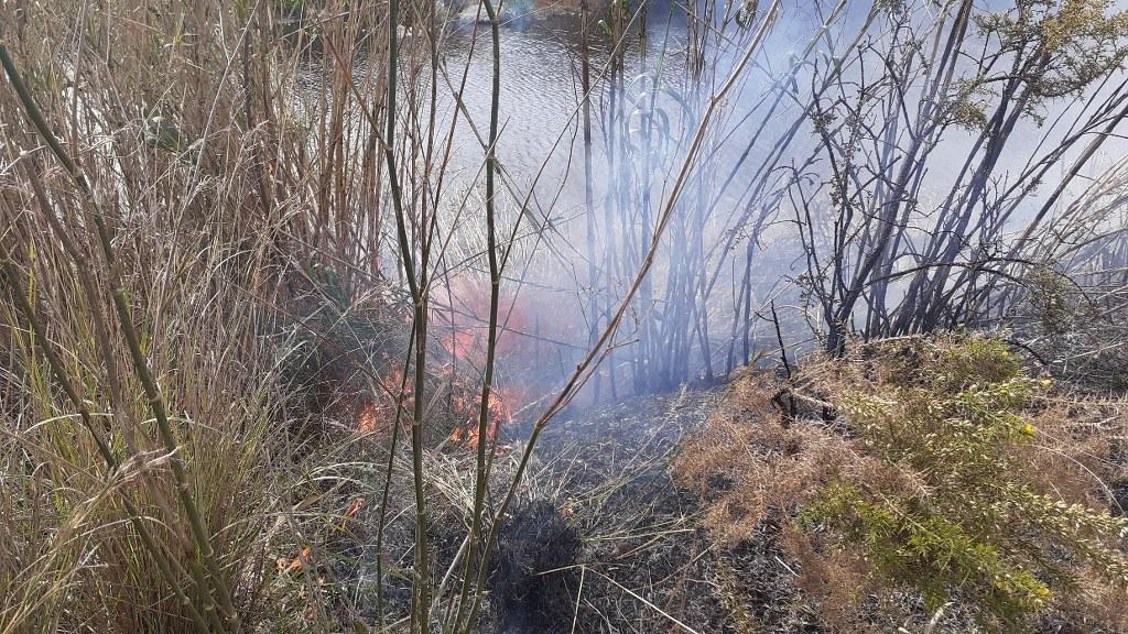 Un xicotet incendi forestal afecta uns 50 metres quadrats de canyar i argelaga borda al Paisatge Protegit de la Desembocadura del riu Millars