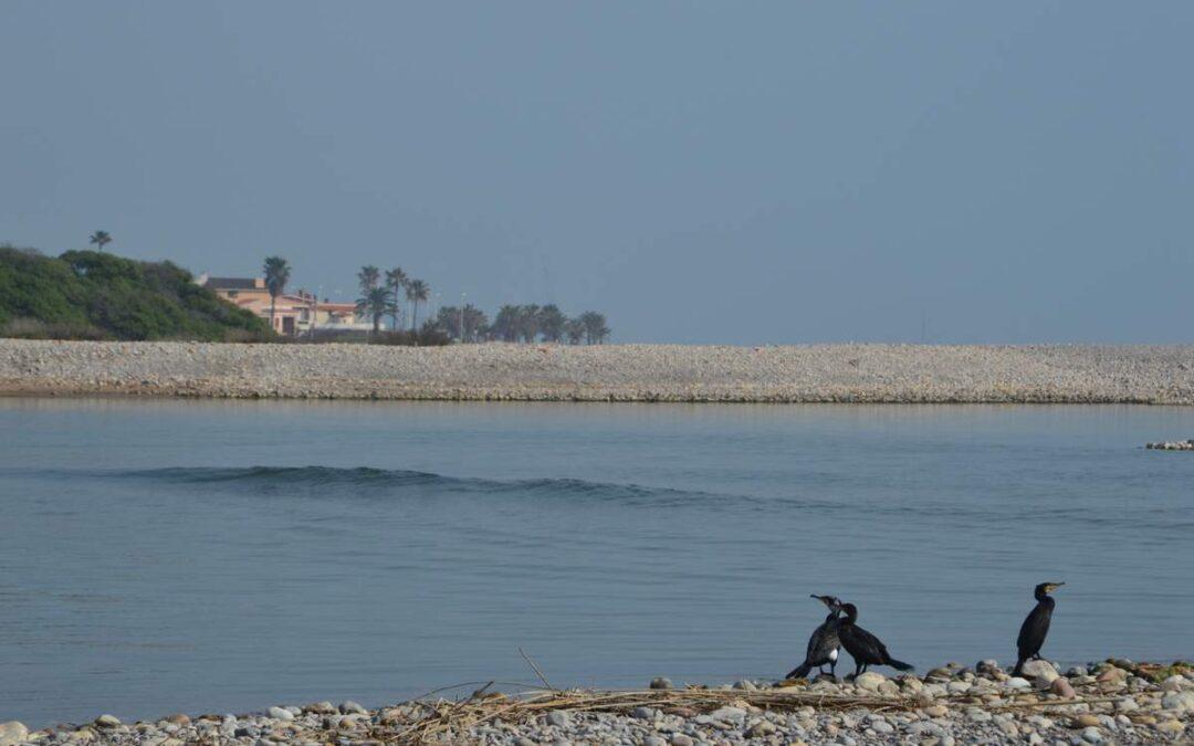 El Millars forma una preciosa llacuna costanera entre la Gola Sud i la Mediterrània